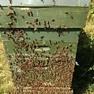 summer honey flow
