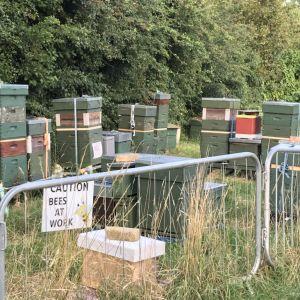 eltham palace hives