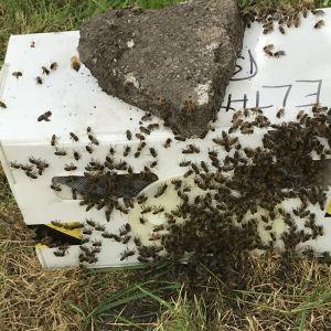 large swarm