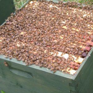 very powerful hive