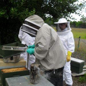 hive skills