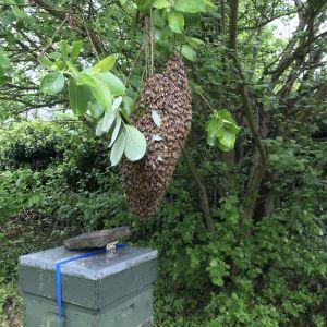 Prime swarm