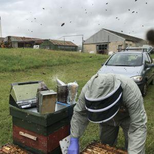 Defra bee inspector