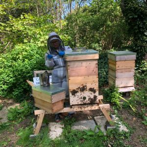 Sorting out Brigittes hives